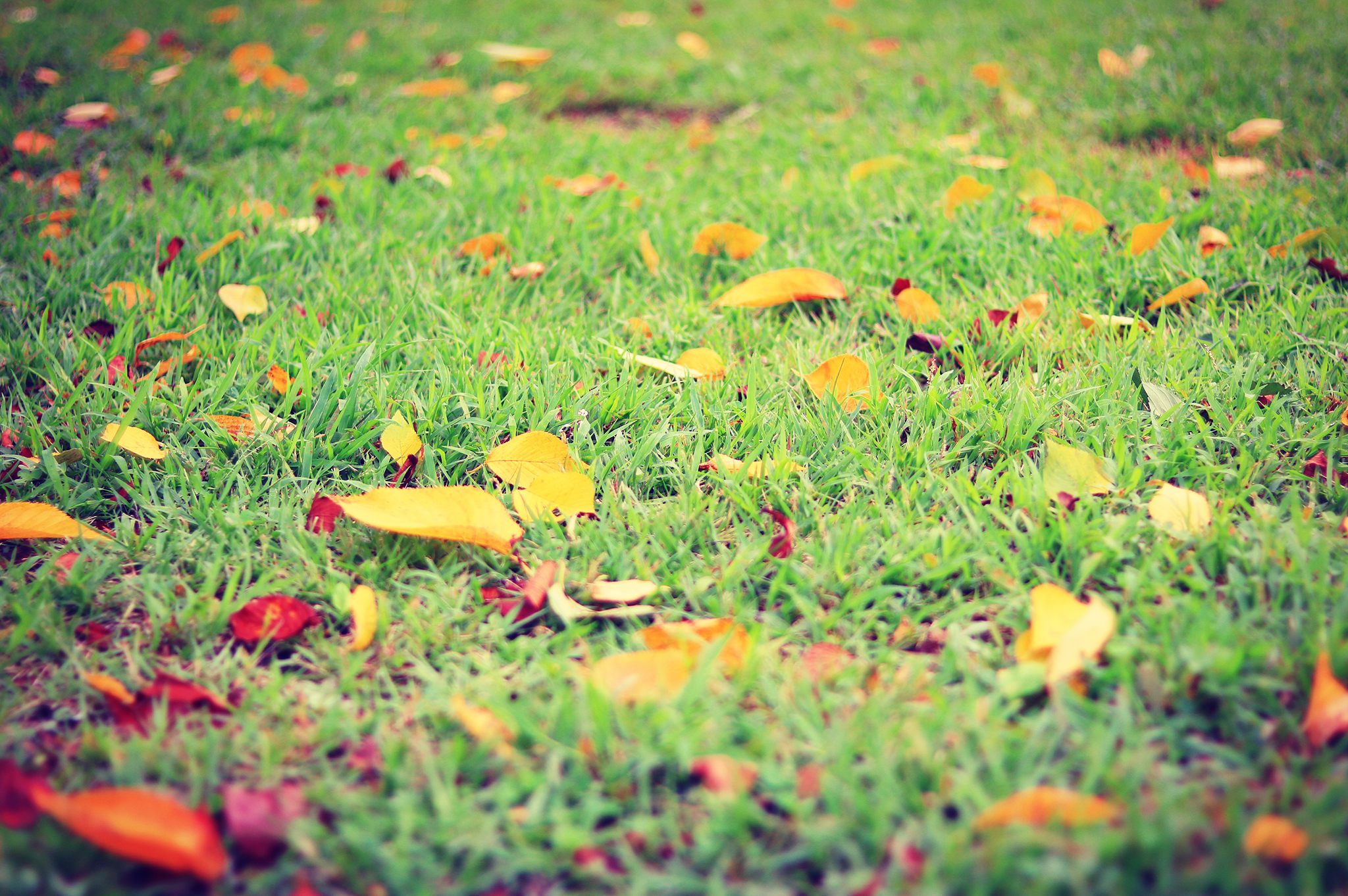 lawn_leaves