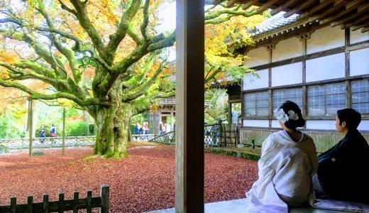 糸島の紅葉スポット|大きな楓で有名な「雷山千如寺」は紅葉だけじゃない